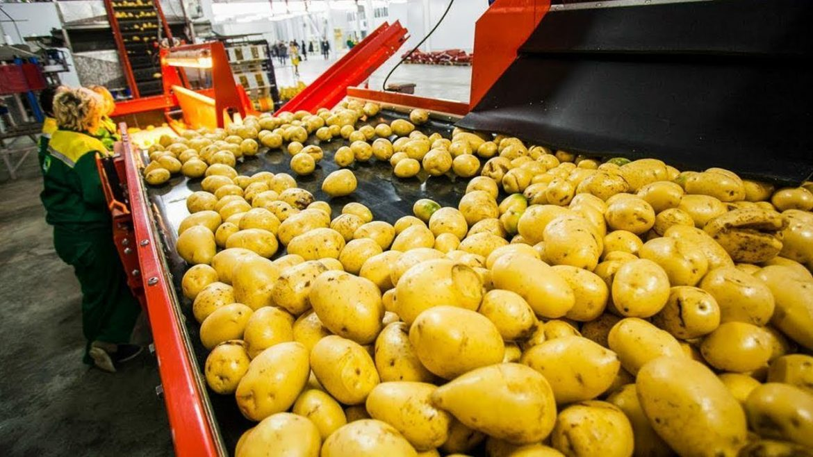 How Do They Make Potato Chips?,